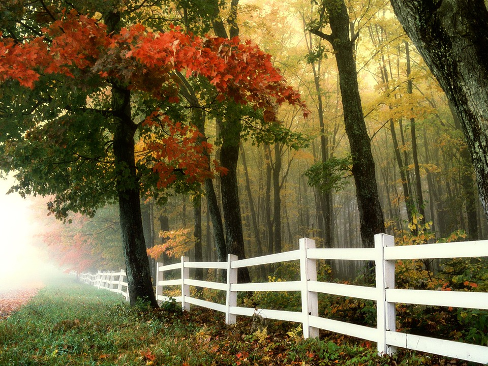 Considering a new fence?