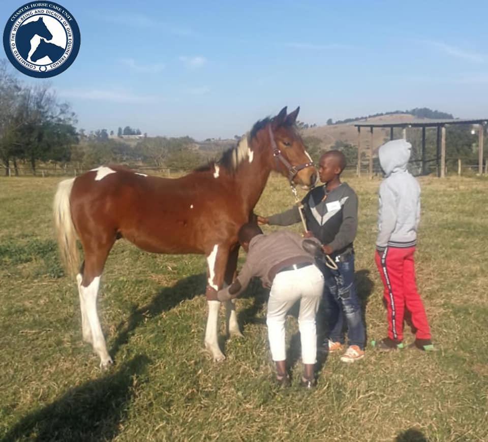 Coastal Horse Care Unit