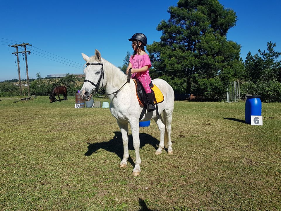 Learn how to communicate with horses effectively