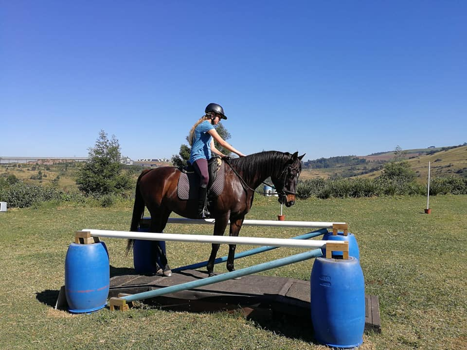 Understand your horse better and resolve challenges